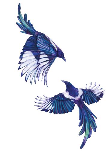 claudine-osullivan-magpie